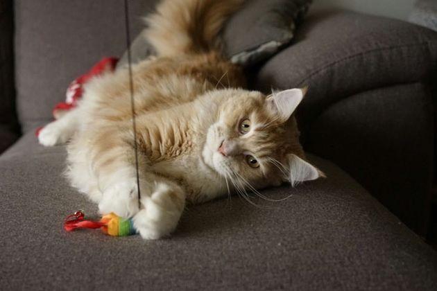 Speelgoed katten hengel