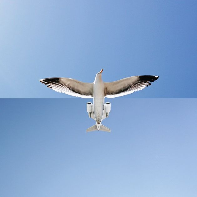 vogel-vliegtuig