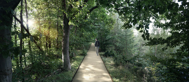 wandelroute-treetop-experience
