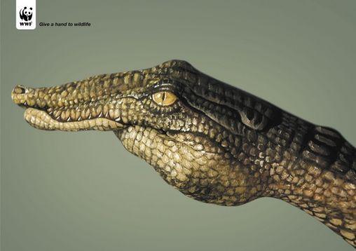 WWFCrocodile-1024x723