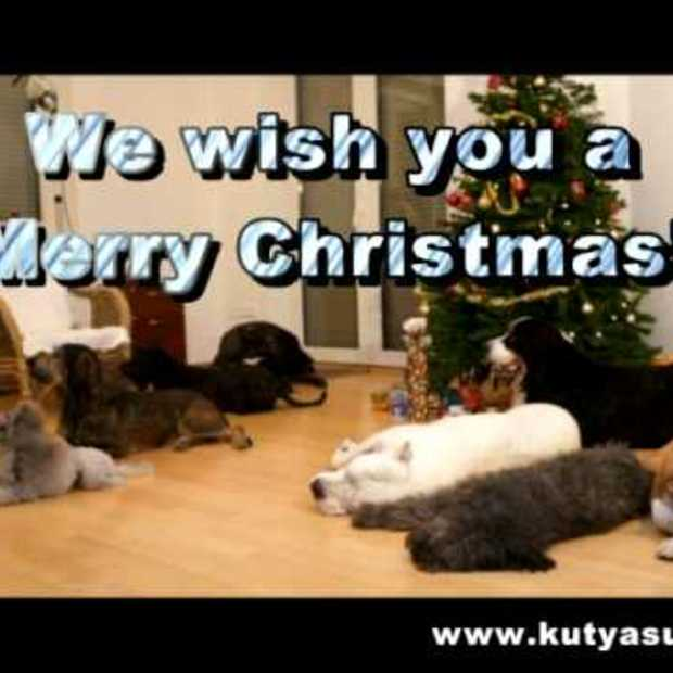 A doggy Christmas surprise