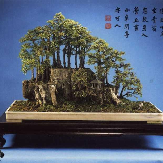 5x de mooiste Bonsai bomen ter wereld!