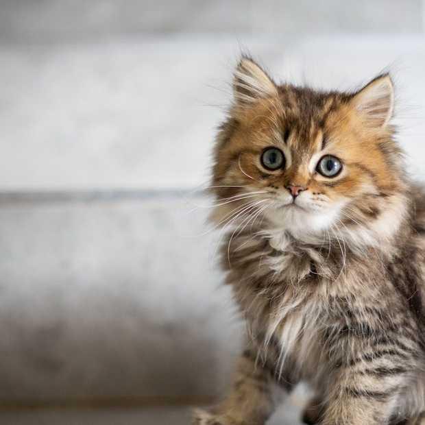 International Cat Day 2020: heb jij je kat vandaag al in het zonnetje gezet?
