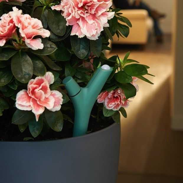 Parrot Flower Power : de wearable die de behoefte van je plant meet!