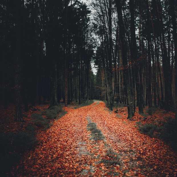 Herfst in Nederland: hier geniet je van de mooiste natuur
