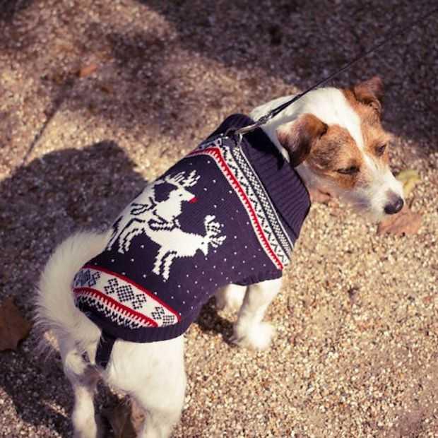 Ook onze huisdieren kunnen volledig in stijl rondlopen tijdens kerst