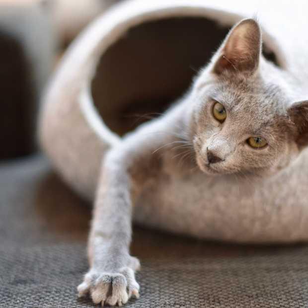 Vijf leuke kattenspullen voor in een stijlvol interieur
