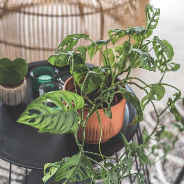 Fleur je huis op: dit zijn de vijf mooiste kamerplanten