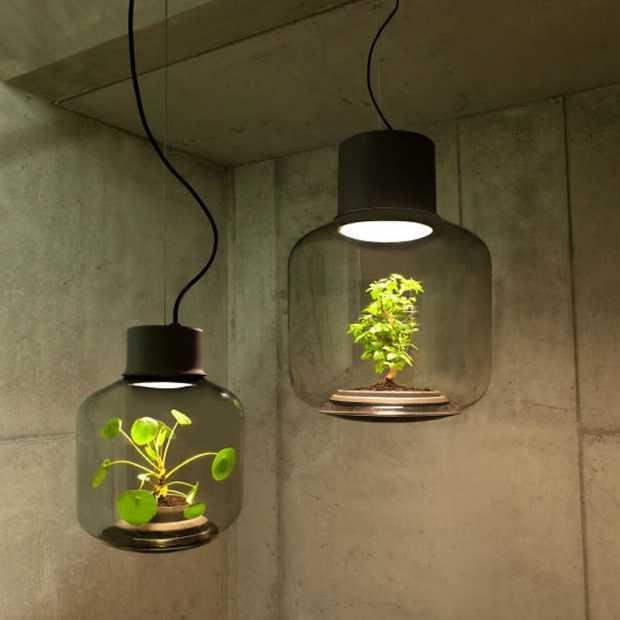 In deze lampen groeien planten die je geen water hoeft te geven