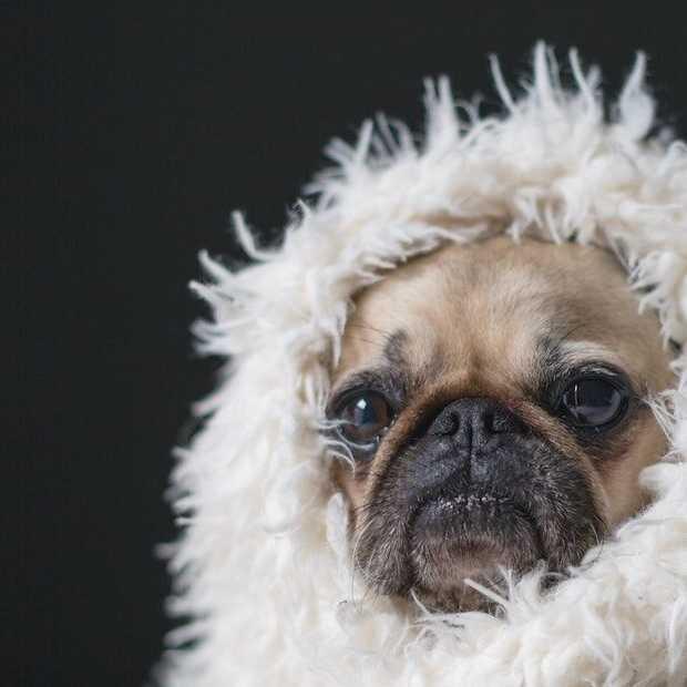 Het is weer bijna dierendag: dit zijn de 10 leukste en populairste dieren op Instagram