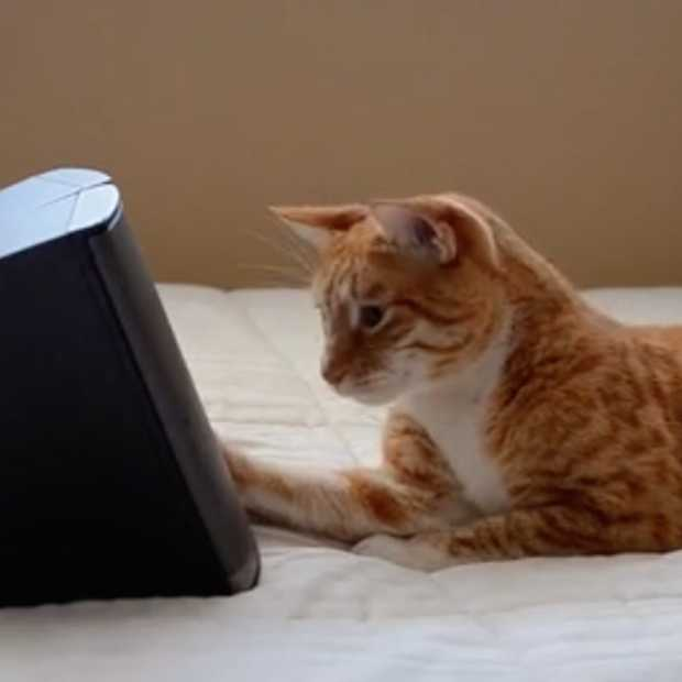 Music for Cats: de eerste echte muziek voor katten