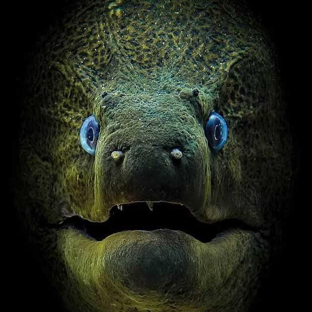 Deze fantastische onderwaterfoto's winnen terecht prijzen