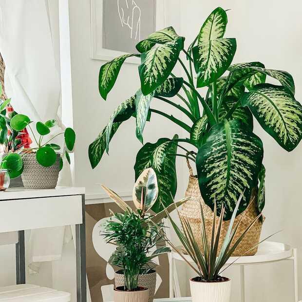 Dit zijn ze: de planten trends van 2021