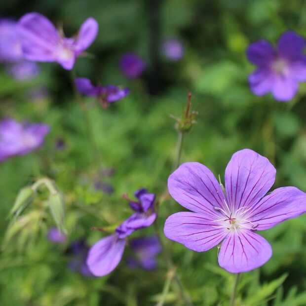 5 tuinplanten voor de herfst: geef kleur aan het najaar